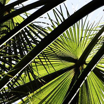 Gilbert Artiaga - La Palm 3