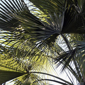Gilbert Artiaga - La Palm 4