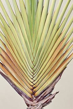 Palm by Jim Nelson