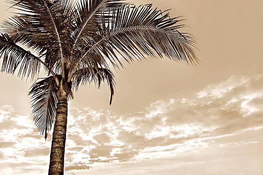 Palm by Laura Schramm-Behnke