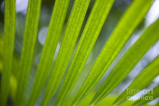 Charmian Vistaunet - Palm Leaf Detail