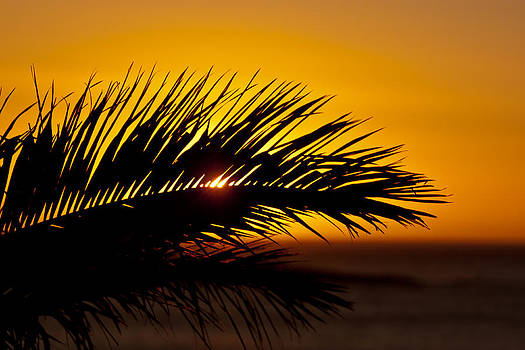 Palm Leaf In Sunset by Yngve Alexandersson