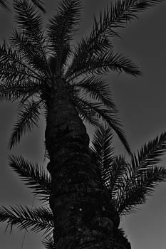 Palm Reader by Tara Miller