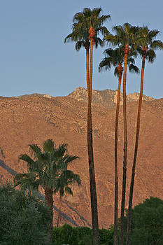 Palm Springs California by Gail Maloney