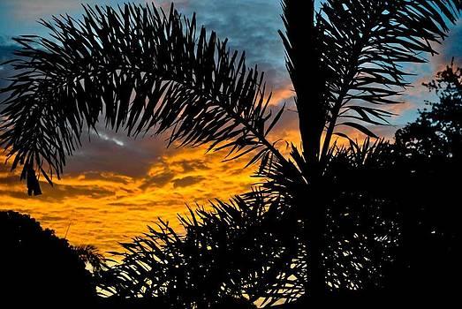 Palm Sunrise by Ken Rutledge
