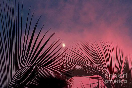 Palm Sunset by Megan Dirsa-DuBois