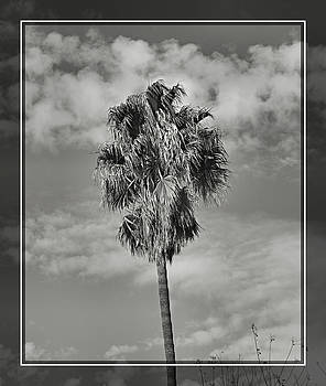 Cindy Nunn - Palm Tree and Clouds