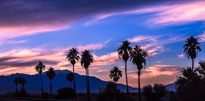 Palm Tree Sunset by Janice Sullivan