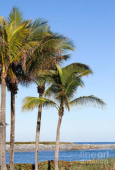 Sabrina L Ryan - Palm Trees at the Jupiter Inlet