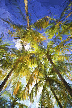 David Letts - Palm Trees of Aruba