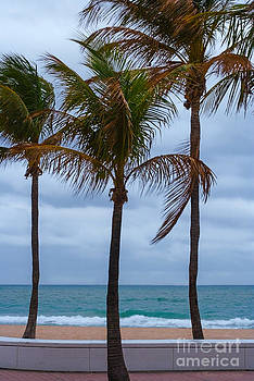 Barbara McMahon - Palm Trees On A Cloudy Windy Warm Beach