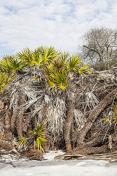 Palmetto Roots by John Clemmer Photography