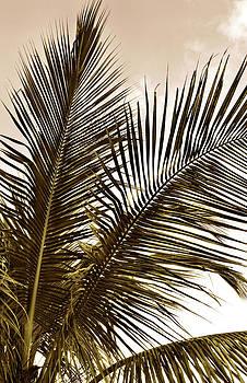Palms by Laura Schramm-Behnke