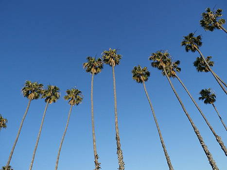 Palms Up by Tonie Cook