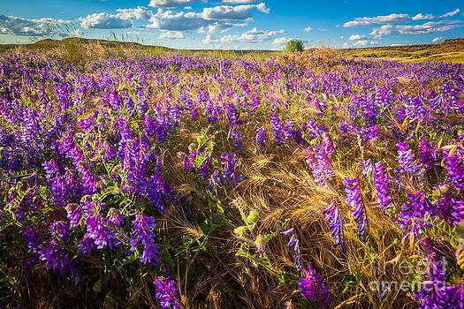 Inge Johnsson - Palouse Falls Wildflowers