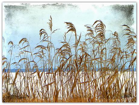Pampas Grass by Dianne  Lacourciere