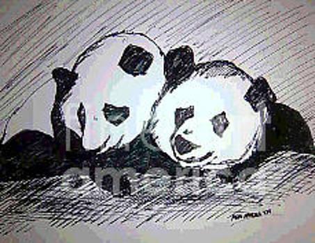 Panda Couple by Asm Ambia Biplob
