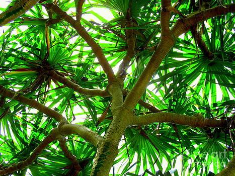Pandanus tree by Ranjini Kandasamy