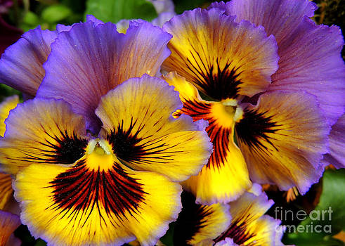 Pansies in a Planter by Pamela Rivera
