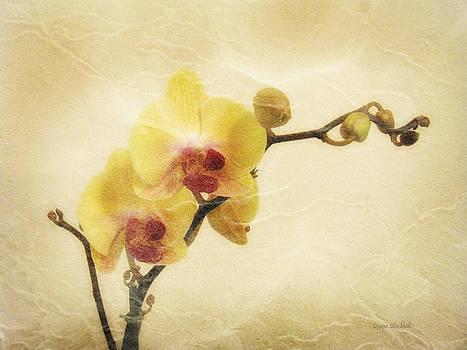 Donna Blackhall - Paper Flowers