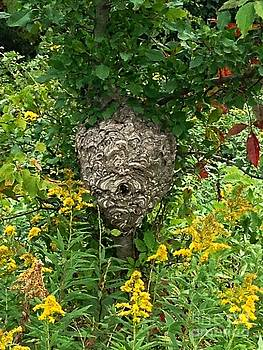 Paper Hornet Nest by Garren Zanker