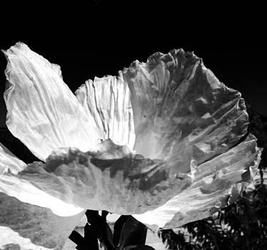 Paper Sun  by Natalya Karavay