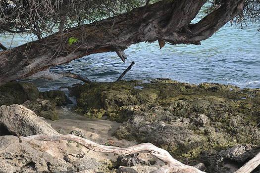 Paradise Cove by Amanda Eberly-Kudamik