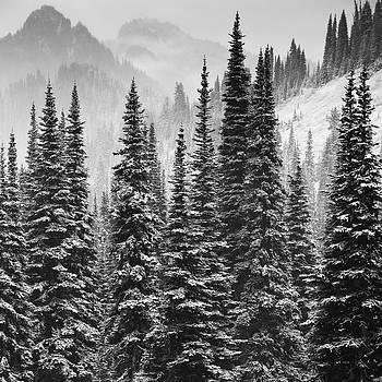 Paradise Valley Black and White by Ross Murphy