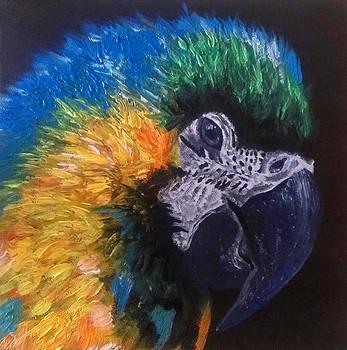 Parrot by Beata Dagiel