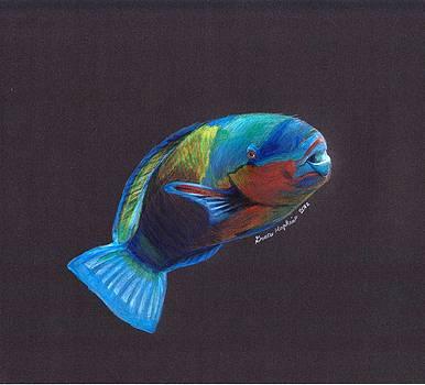 Parrot Fish by Grace