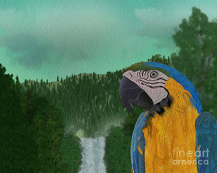Parrot in the Woods by Michael Lovell