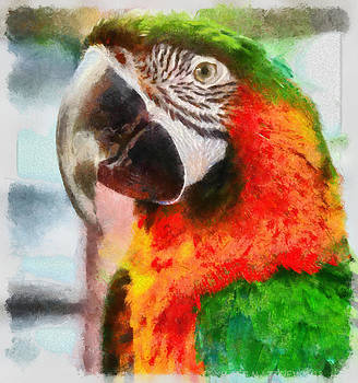 Parrot by Matt Matthews