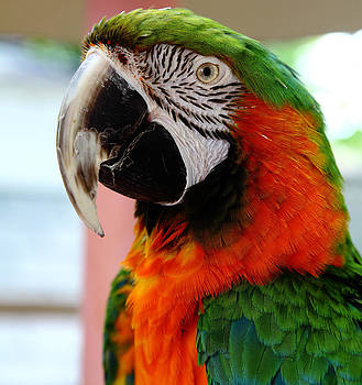 Parrot Photo by Matt Matthews