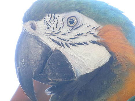 Parrot Talk by Erin Lorandos