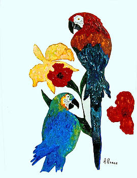 Parrots by Andrew Petras