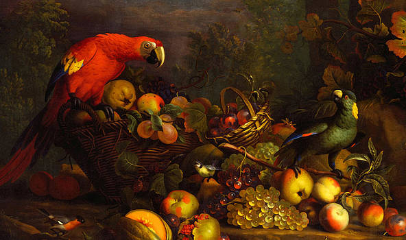 Parrots by Tobias Stranover