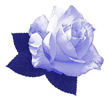 Jane McIlroy - Pascali Rose