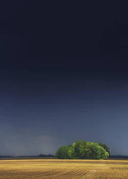 Passing Storm with sun on trees by Michael Huddleston