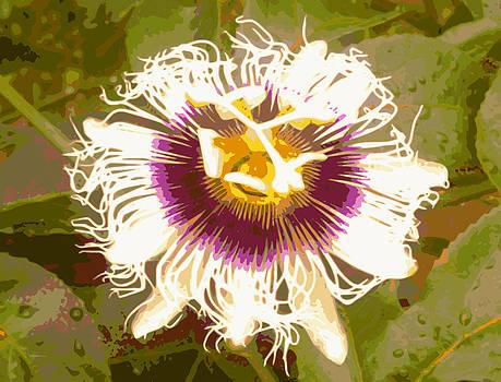 Passion Fruit Flower by Ricardo  De Almeida