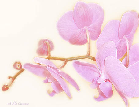 Pastel Orchids by Mikki Cucuzzo