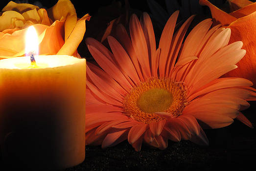 Cindy Boyd - Pastel Pink Daisy With Candle