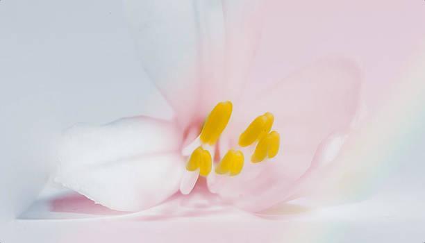 Pastels by Cecil Fuselier