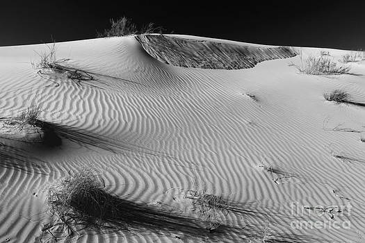 Adam Jewell - Patches In The Dunes