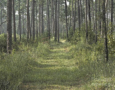 Path in the Woods by Robert  Suggs