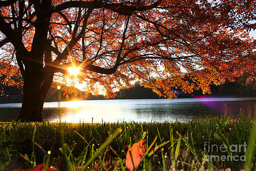 Path Into Autumn by Everett Houser