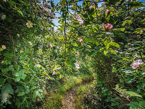 Path through a wild rose hedge by Martin Liebermann