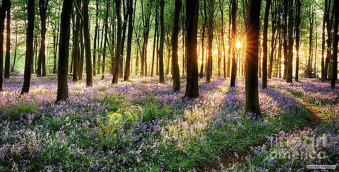 Simon Bratt Photography LRPS - Sunrise path through bluebell woods