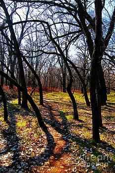 Path thru the oaks by David Taylor