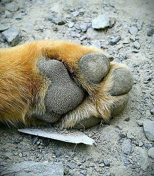 Paw by Courtnee Epps