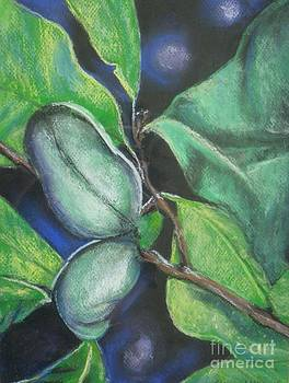 Paw Paw by Sharon Wilkens
